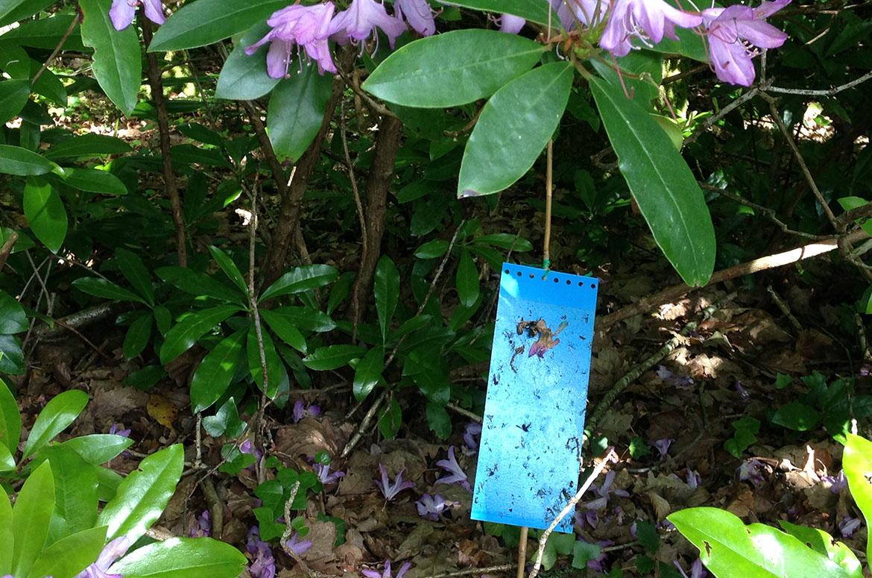 Entretien de jardin espaces verts technatura for Entretien jardin quesnoy sur deule